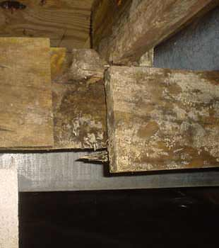 Extensive basement rot found in Elliot Lake by Kenmar Basement Systems