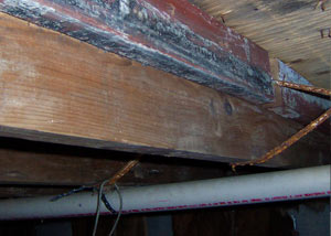 Rotting, decaying wood from mold damage in Little Current